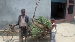 Untold Story of Somvati