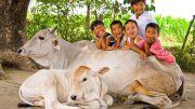 Cow Protection Cow Slaughter Animal Lives Matter Gau Sewa Gau Rakshaks