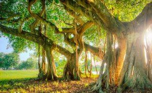 Forest Hindu Dharma