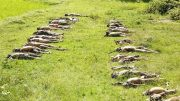 રોહિંગ્યા Mass Graves of Hindus Murdered by ARSA