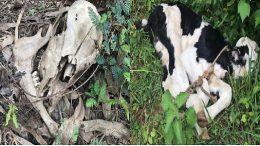 slaughterhouse-karnataka-illegal